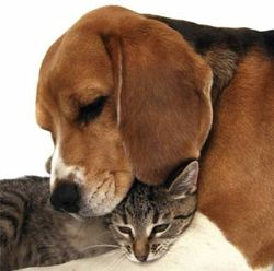 Dog_and_cat_together