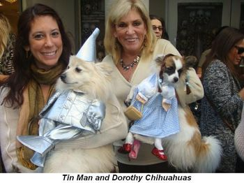 Blog 3 - Tin Man and Dorothy Chihuahuas