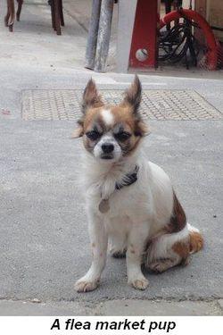 Blog 25a - A flea market pup