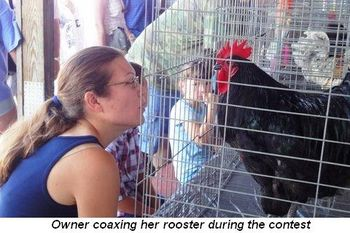 Blog 2 - Owner coaxing her rooster during contest