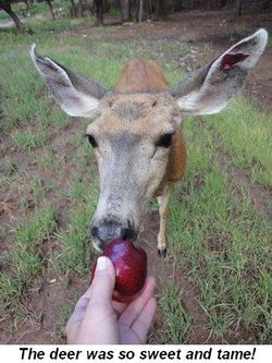 Blog 12 - The deer were so sweet and tame