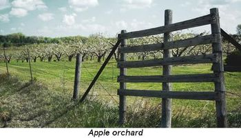 Blog 2 - Apple orchard