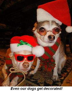 Blog 2 - Even our dogs get decorated!