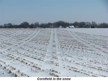 Blog 3 - Cornfield in snow