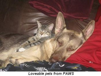 Blog 4 - Lovable pets from PAWS