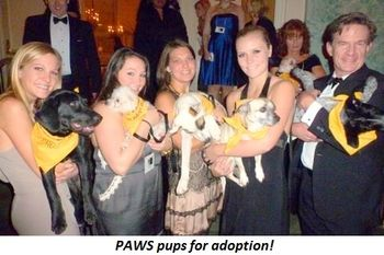 Blog 2 - PAWS pups for adoption!