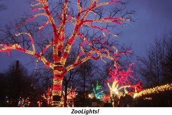 Blog 2 - Zoolights!