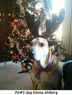 PAWS dog Emma Ahlberg