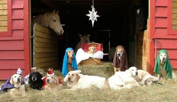 Dogs in manger