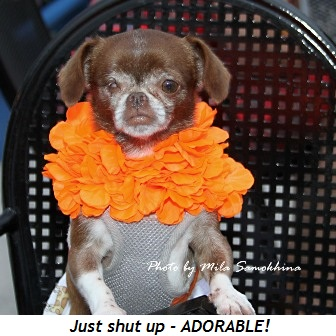 Blog 13 - Just shut up!!!  Adorable!