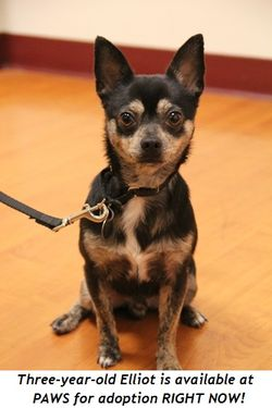 5 - Three year old Elliot is available at PAWS NOW for adoption!
