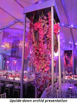 17 - Upside-down orchid presentation