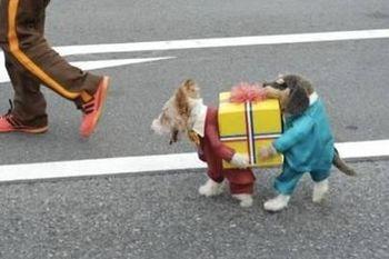 Dog costume #2 untitled.JPG