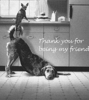 Thank-you-for-being-my-friend-57353529341