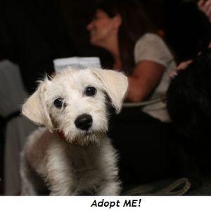 2 - Adopt ME!