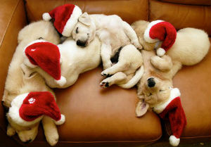 Christmas-santa-puppies