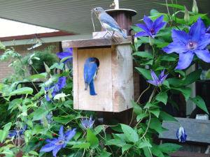 BusyBluebirds