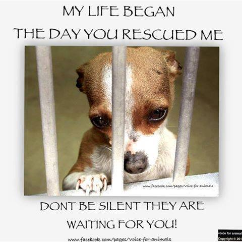 Animal welfare image