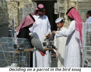 Deciding on a parrot in the bird souq